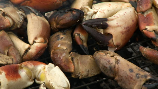 stone crab claws on grill - crustacean stock videos & royalty-free footage