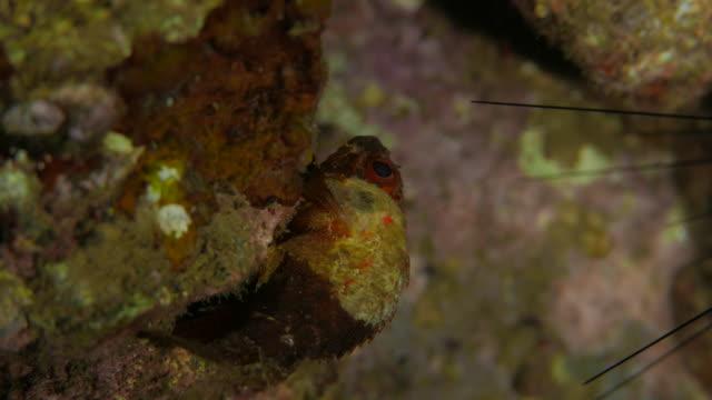 Steinfisch undersea ausblenden