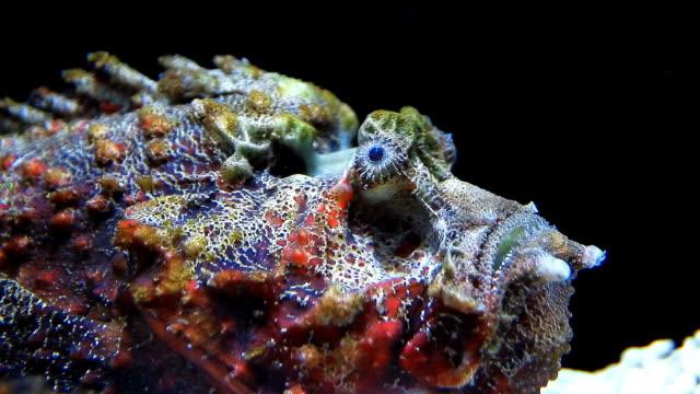 Stone Fisch
