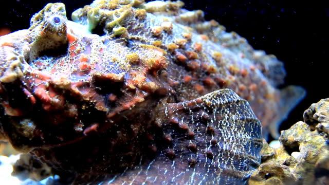 Stone Fisch.