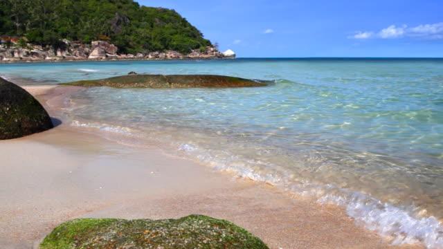 vidéos et rushes de pierre dans l'eau - arbre tropical
