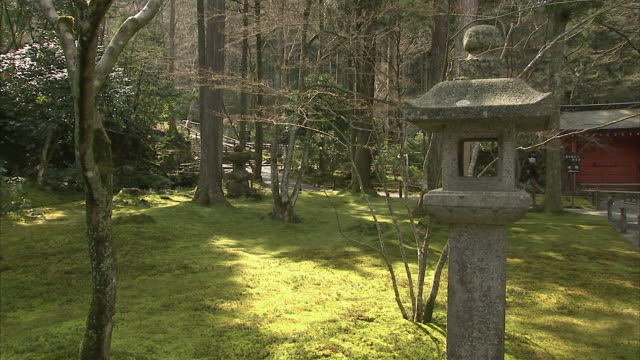 MS ZO WS Stone lanterns in moss covered forest, Sanzenin temple, Kyoto, Japan
