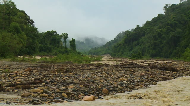 stockvideo's en b-roll-footage met stone pebbles of river manu, rainforest, peru - rivieroever
