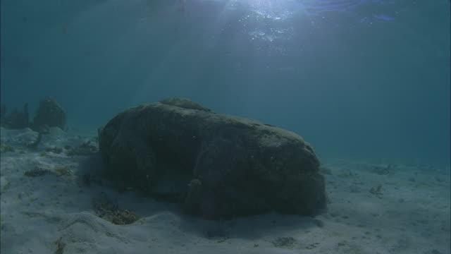slo mo pov stone statue head on sandy ocean floor / moorea, tahiti, french polynesia - statue stock videos & royalty-free footage