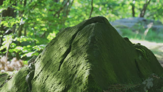 Stone with Moss in Green Forest