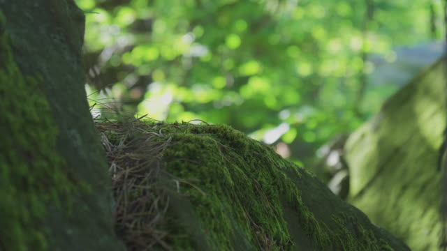 stone with moss in green forest - moss stock videos & royalty-free footage