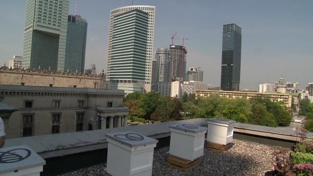 stonecrops and bee hives on roof of palace of science and culture in warsaw - warsaw stock videos & royalty-free footage