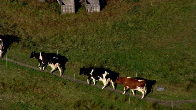 石垣ファームと牛 - 空中写真 - ニューハンプシャー州チェシャー郡、アメリカ合衆国 - cattle点の映像素材/bロール