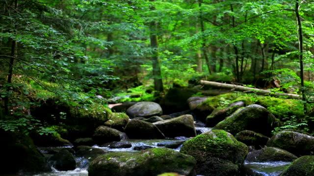 steinigen bach im frühlingswald cinemagramm - naturwald stock-videos und b-roll-filmmaterial