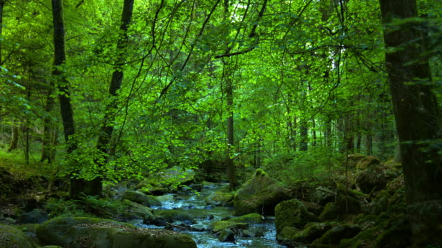 stony stream in spring forest - green stock videos & royalty-free footage