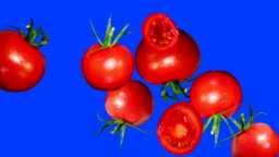 stop motion animation of tomatoes, blue editable screen