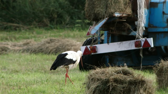 stork and machine - hay baler stock videos & royalty-free footage