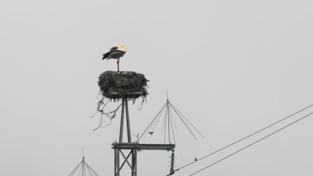 stork in nest, huelva province - huelva province stock videos & royalty-free footage