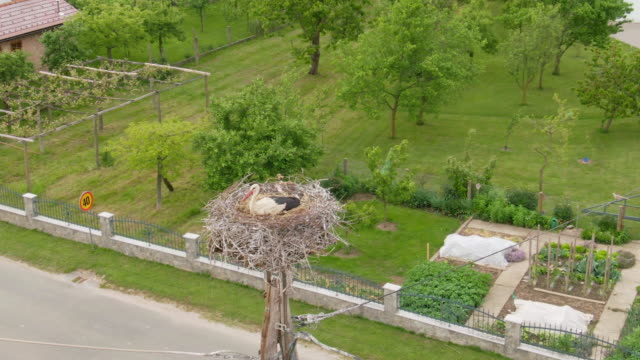 aerial  stork nesting on a wooden electric pylon - prekmurje stock videos & royalty-free footage