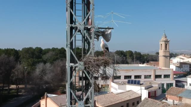 stork nesting on an electricity tower, pina del ebro - nest stock-videos und b-roll-filmmaterial