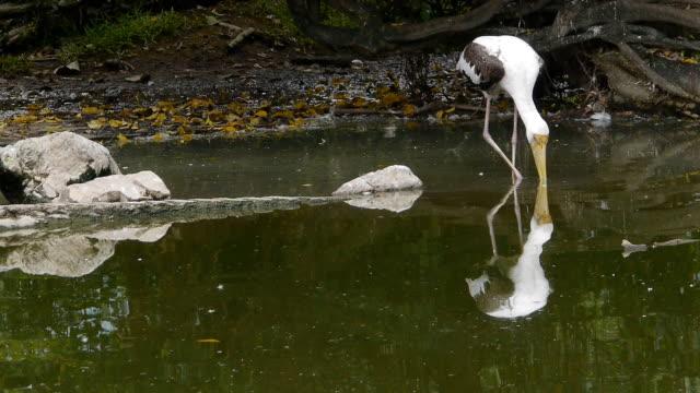 Stork on marsh