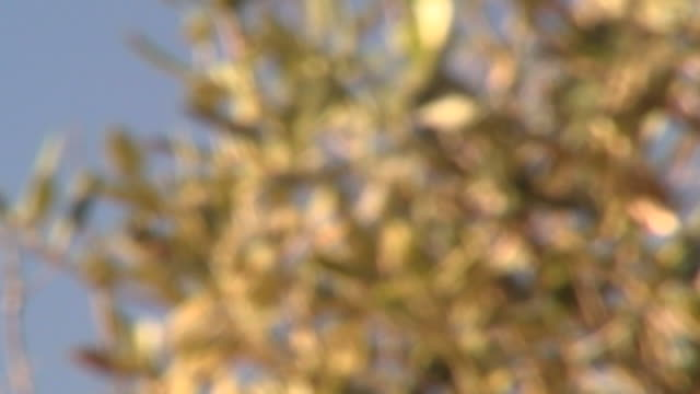 stork. rack-focus on a stork soaring in a blue sky over a meadow in south lebanon. - animal wing stock videos & royalty-free footage