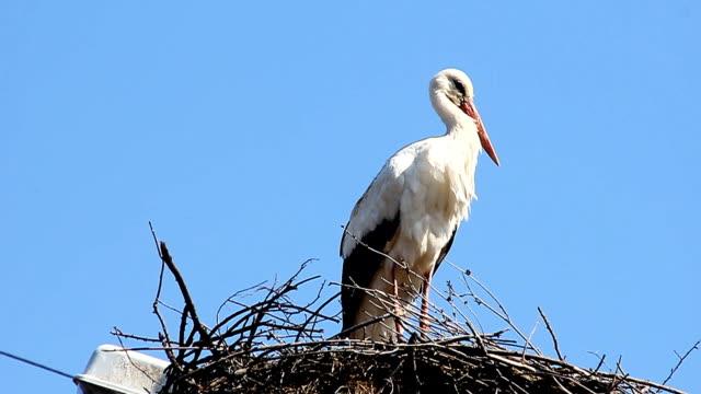 vídeos de stock, filmes e b-roll de cegonha sentado no ninho e voar - parte do corpo animal