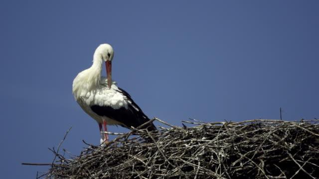 stockvideo's en b-roll-footage met stork - dierlijke mond