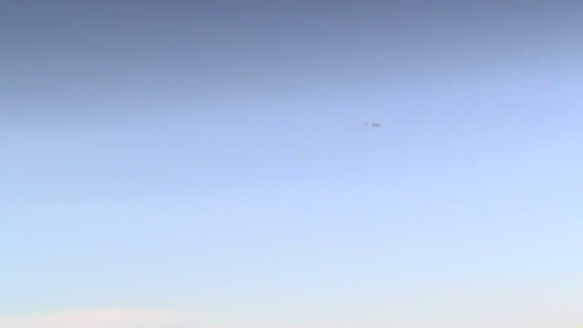 stork. worm's eye view of a stork soaring in a blue sky over a south lebanese landscape. - animal wing stock videos & royalty-free footage