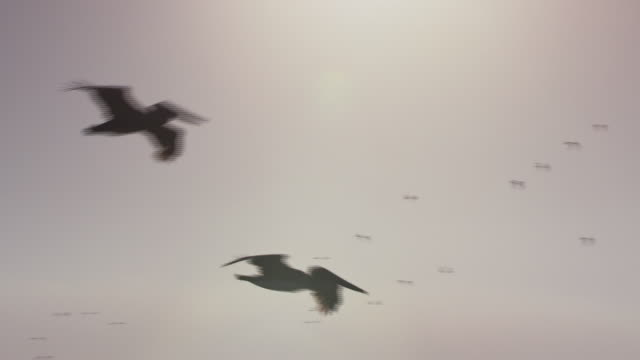 stork-like birds dive and fly together - yucatan peninsula stock videos and b-roll footage