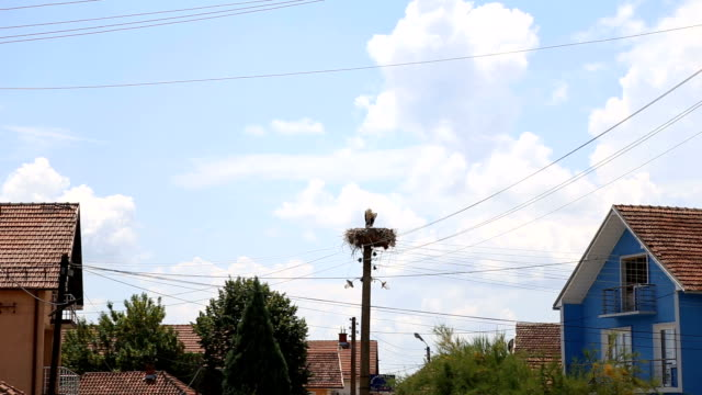 storks made a nest on a pole in the street - view from below - bird's nest stock videos & royalty-free footage