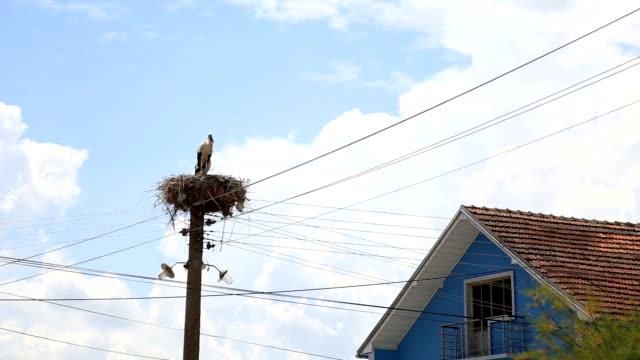 vídeos y material grabado en eventos de stock de hizo un nido en un poste junto a la casa de las cigüeñas - boca de animal