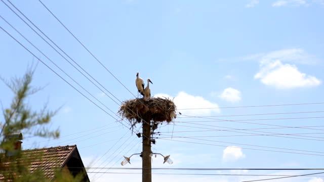 vídeos y material grabado en eventos de stock de las cigüeñas hacen un nido en un poste - boca de animal