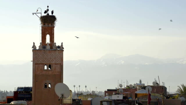 stork's nest on top of minaret, morocco, north africa - minareto video stock e b–roll