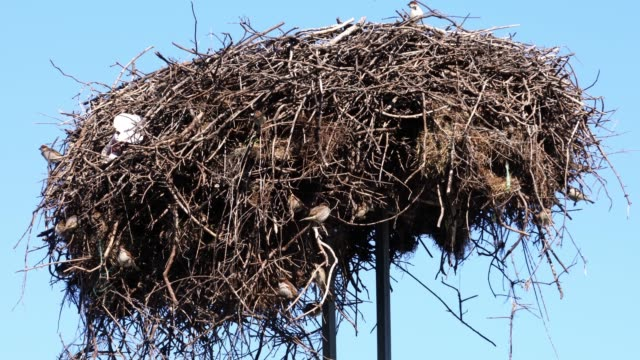 a stork's nest used by sparrows - symbiotic relationship stock videos & royalty-free footage