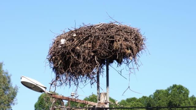 a stork's nest used by sparrows - animal nest stock videos & royalty-free footage