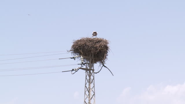 ws storks nesting on pylon landing / huelva, andalusia, spain       - bird's nest stock videos & royalty-free footage