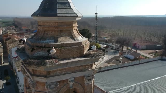 storks nests on the old tower in pino del ebro - spire stock videos & royalty-free footage