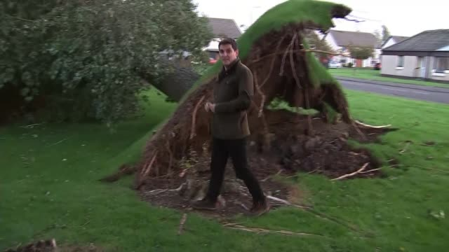 Two people killed SCOTLAND Ayrshire Prestwick EXT Reporter to camera next to fallen tree which has crashed into houses