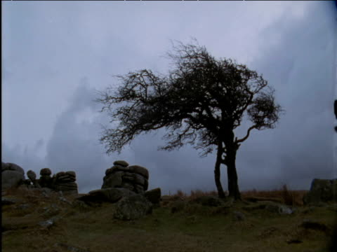 storm cloud swirls over boulders and windswept tree - grey colour stock videos & royalty-free footage