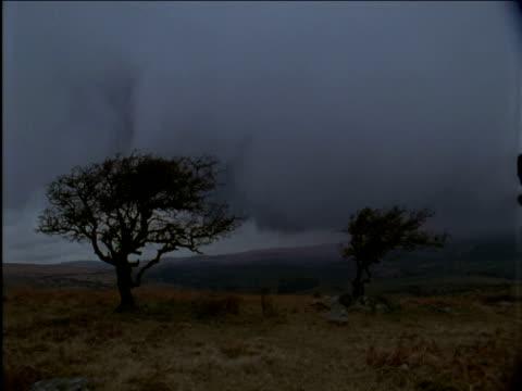 storm cloud swirls over windswept trees - dartmoor stock videos & royalty-free footage