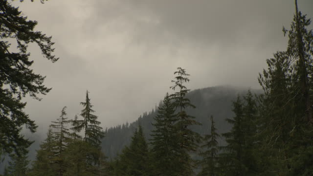 Storm clouds churn over an evergreen forest.