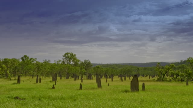Storm clouds gather above spectacular Magnetic Termite Mounds on lush green savannah