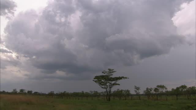vidéos et rushes de storm clouds gather over grassy plains. - cumulonimbus