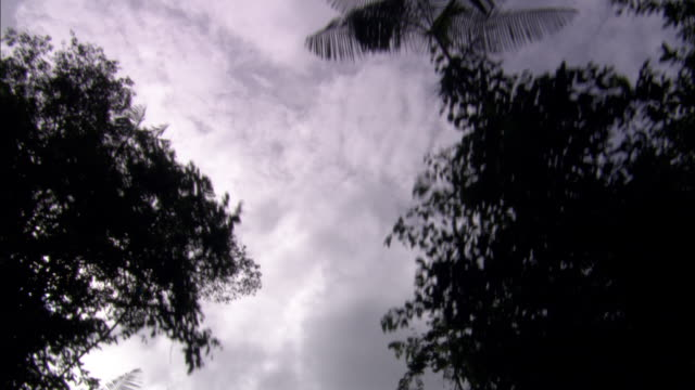 storm clouds gather over tall, leafy trees. - french guiana stock videos & royalty-free footage