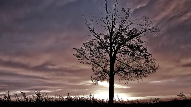 hd motion time-lapse: storm clouds over a tree - single tree stock videos & royalty-free footage
