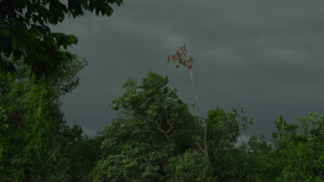 storm clouds over rainforest. - colour image stock videos & royalty-free footage