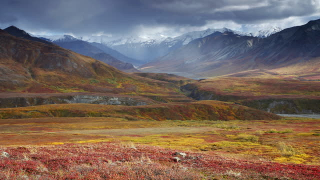 storm clouds speed in time lapse over the mountains of denali national park, alaska. - denali national park stock videos & royalty-free footage