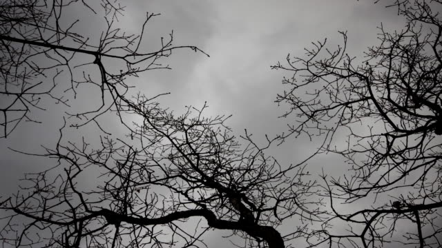 storm clouds swirl above bare tree branches. - bare tree stock videos & royalty-free footage