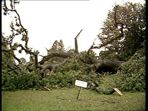 storm damage to london parks; england: london: kew gardens: ext tms leaves covering entrance to kew gardens zoom in sign 'gardens closed until... - curator stock videos & royalty-free footage