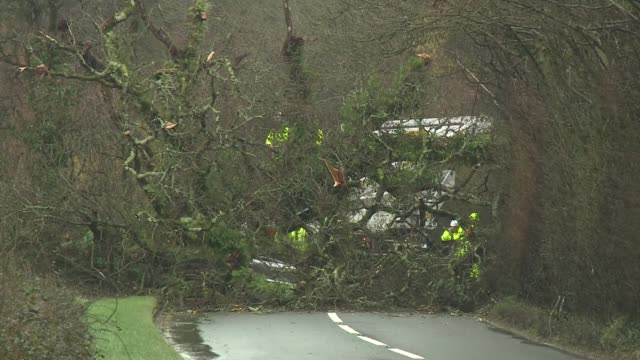 storm erik leaves two dead amid winds of up to 70 miles per hour; england: devon: ext / raining fallen tree blocking road police car in front of... - devon stock videos & royalty-free footage