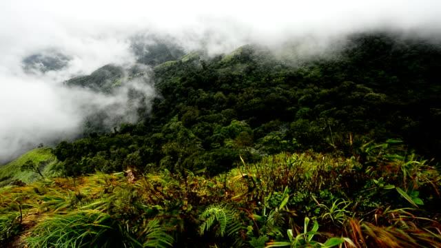 storm fog at Phu Tubberk inthailand