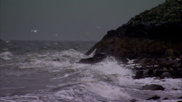 a storm tosses waves against england's rugged west coast. available in hd. - seagull stock videos & royalty-free footage