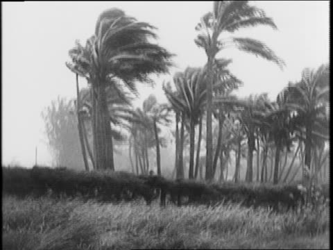 vídeos de stock, filmes e b-roll de storm warning pennant flying palm trees blowing / boats pulling into harbor / taking down store signs 'ferrell motors cash for cars' / men walking... - condição