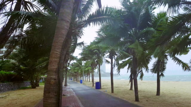 storm windy at the beach with swaying coconut palm tree - inarcare la schiena video stock e b–roll